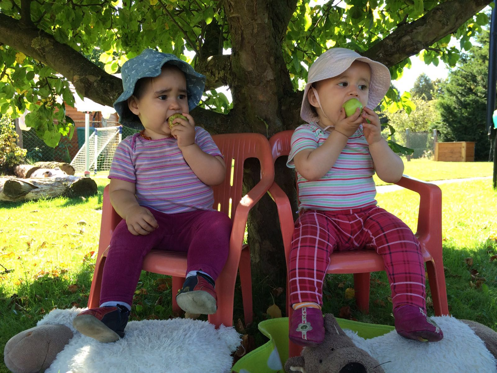 Alimento orgânico na infância